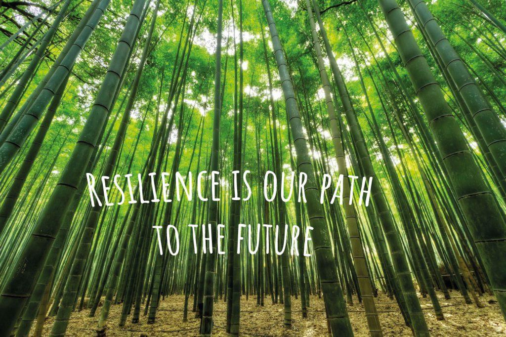 Bambuswald als natürliches Sinnbild für Resilienz