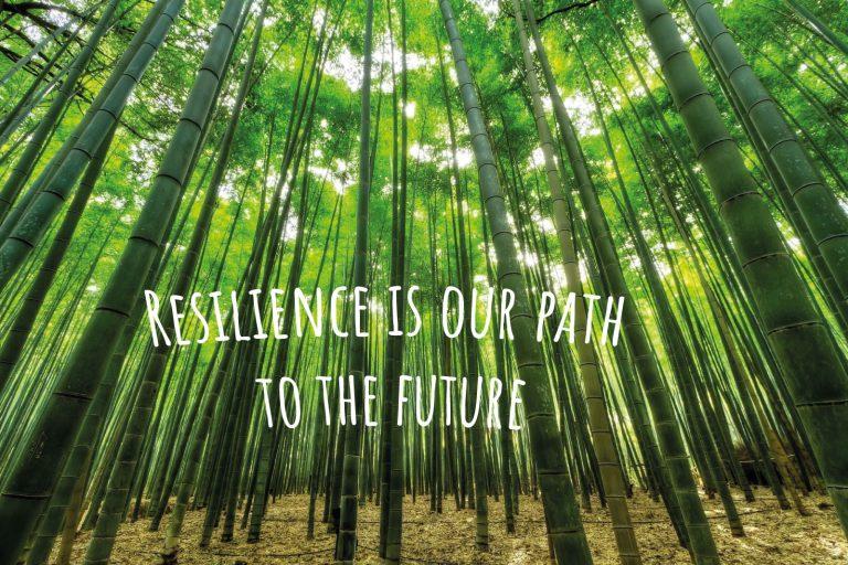 Bambuswald als Sinnbild für Resilienz