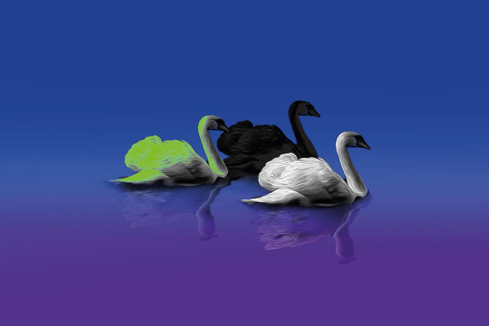 Drei Schwäne: weiß, schwarz und grün