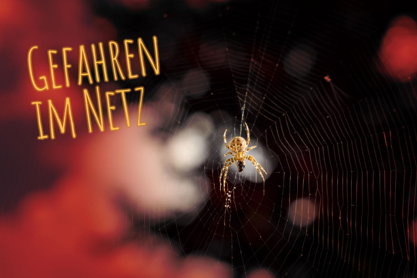Das Spinnennetz als Sinnbild fürs WWW