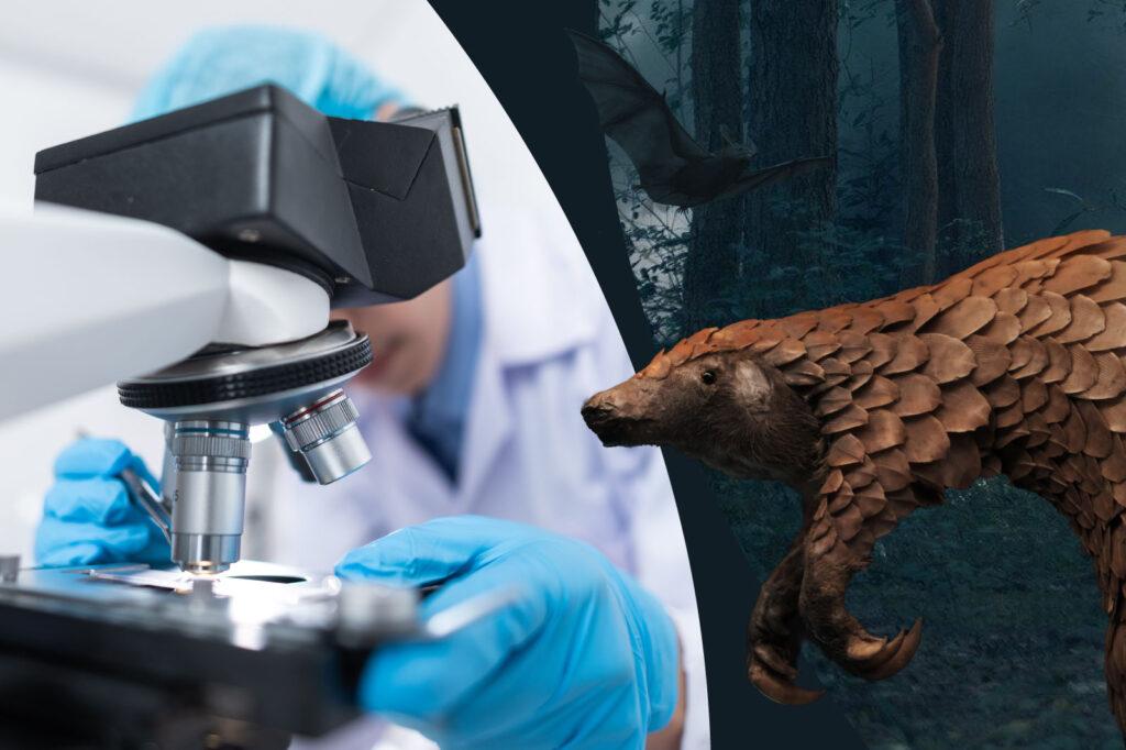 Mensch oder Tier als Überträger für das Coronavirus