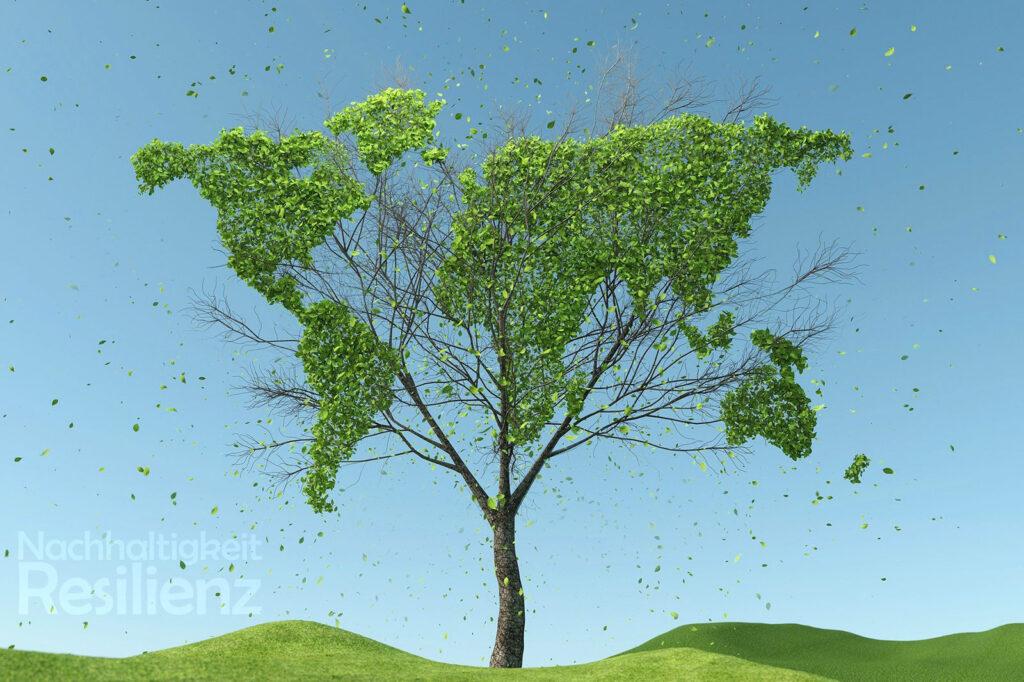 Nachhaltigkeit und Resilienz weltweit - ein noch zartes Bäumchen.